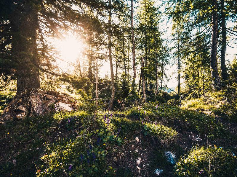 Wanderung durch die Wälder in Kaprun